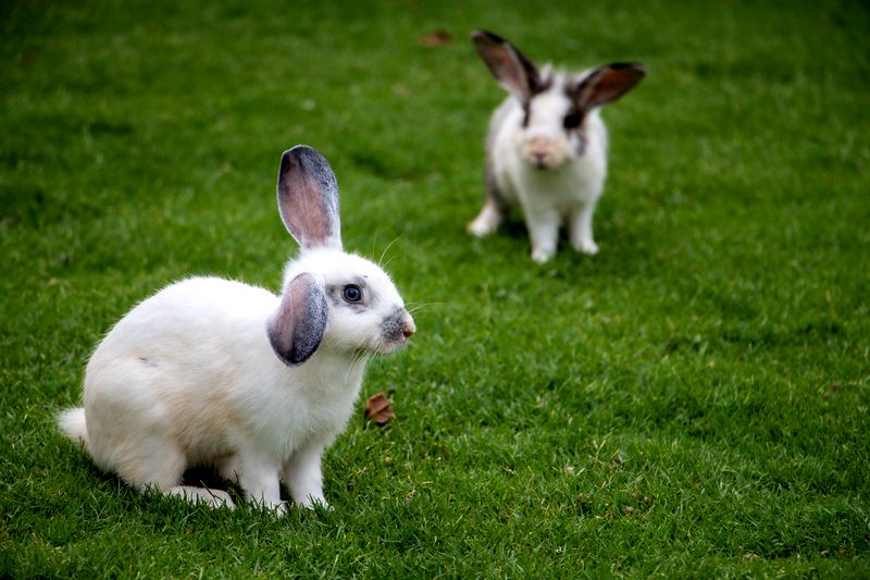 What to consider when you have to choose food for your rabbit and tips for dog crates